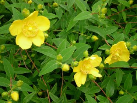 Fleurs de l'i-grimoire